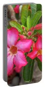Desert Rose Or Chuanchom Dthb2108 Portable Battery Charger
