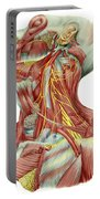 Detailed Dissection View Of Human Neck Portable Battery Charger