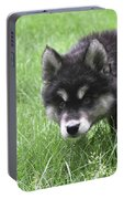 Dew Drops On The Nose Of An Alusky Puppy Dog Portable Battery Charger