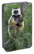 Diademed Sifaka Portable Battery Charger