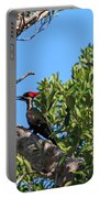 Ding Darling - Pileated Woodpecker Resting Portable Battery Charger