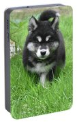 Dinstinctive Black And White Markings On An Alusky Pup Portable Battery Charger