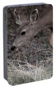 Doe Carefully Grazing In Tombstone Portable Battery Charger