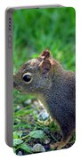 Douglas Squirrel  Portable Battery Charger