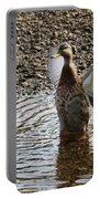 Duck In A Flap Portable Battery Charger