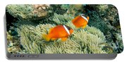 Dusky Clownfish Portable Battery Charger