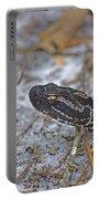 Dusky Pygmy Rattlesnake Portable Battery Charger