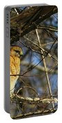 Early Morning Still Hunting  Coopers Hawk Art Portable Battery Charger