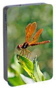 Eastern Amber Wing Dragonfly Portable Battery Charger
