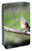 Eastern Bluebird Portable Battery Charger by George Randy Bass