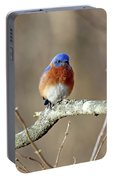 Eastern Bluebird Portable Battery Charger