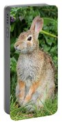 Eastern Cottontail Portable Battery Charger