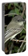 Eastern Wood Peewee Portable Battery Charger