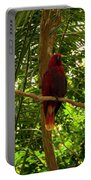 Eclectus Parrot 1 Portable Battery Charger