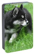 Eight Week Old Alusky Puppy On A Summer Day Portable Battery Charger