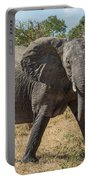 Elephant Crossing Dirt Track Facing Towards Camera Portable Battery Charger