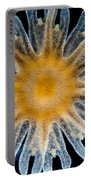 Ephyra Of A. Aurita Jellyfish, Lm Portable Battery Charger