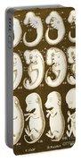 Ernst Haeckels Evolution Of Man, 1874 Portable Battery Charger