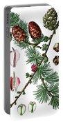 European Larch, Pinus Larix Portable Battery Charger