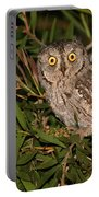 European Scops Owl  Portable Battery Charger