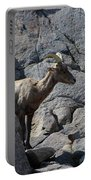 Ewe Bighorn Sheep Portable Battery Charger