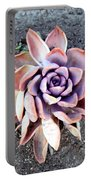 Exotic Succulent Plant - Pink Lilac Portable Battery Charger