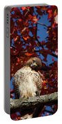 Expressive Hawk Portable Battery Charger