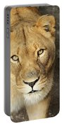 Eyes Of The Lioness Portable Battery Charger