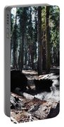 Fallen Sequoia Crescent Meadow Trail Portable Battery Charger