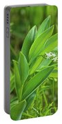 False Solomon Seal Portable Battery Charger