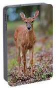 Fawn In Woods At Shiloh National Military Park Portable Battery Charger