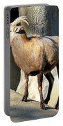 Female Bighorn Sheep Ewe Portable Battery Charger