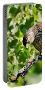 Female Cooper's Hawk Feeding Portable Battery Charger