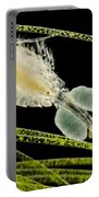 Female Copepod Cyclops Sp., Lm Portable Battery Charger
