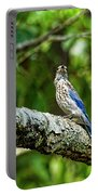 Female Eastern Bluebird Portrait Portable Battery Charger