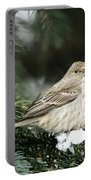 Female House Finch On Snow Portable Battery Charger