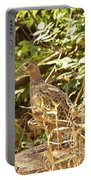 Female Ring-necked Pheasant - Phasianus Colchicus Portable Battery Charger
