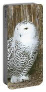 Female Snowy Owl Portable Battery Charger