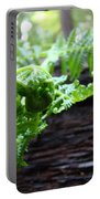 Fern On Redwood Tree Art Print Baslee Troutman Portable Battery Charger
