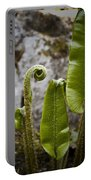Fern Study At Blarney Castle Ireland Portable Battery Charger