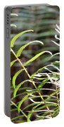Ferns In Natural Light Portable Battery Charger