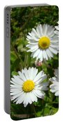 Field Of White Daisy Flowers Art Prints Summer Portable Battery Charger