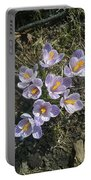 First Crocuses Of Spring 2015 Portable Battery Charger