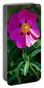 Orchid Rock Rose At Pilgrim Place In Claremont-california  Portable Battery Charger