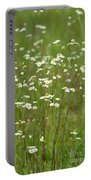 Fleabane In The Meadow Portable Battery Charger