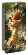 Fledgling Yellow Warbler Portable Battery Charger