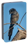 Florida Scrub Jay Pondering Life's Choices Portable Battery Charger