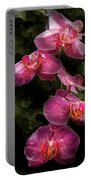 Flower - Orchid - Phalaenopsis - The Cluster Portable Battery Charger