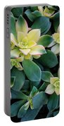 Flowering Succulent Plant Portable Battery Charger