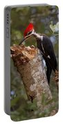 Foraging Pileated Woodpecker Portable Battery Charger